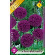 VIRÁGHAGYMA DÍSZHAGYMA Allium aflatunense 3db/cs 12/+