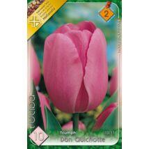 VIRÁGHAGYMA TULIPÁN Tulipa Don Quichotte 10db/cs   10/11