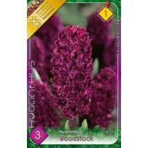 VIRÁGHAGYMA JÁCINT Hyacinthus Woodstock 3db/cs 14/15