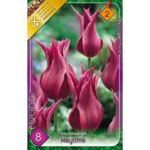 VIRÁGHAGYMA TULIPÁN Tulipa Maytime 8db/cs 10/11