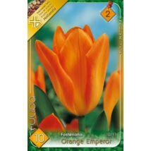 VIRÁGHAGYMA TULIPÁN Tulipa Orange Emperor 10db/cs 10/11
