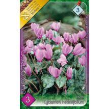 VIRÁGHAGYMA CIKLÁMEN Cyclamen hederifolium 3db/cs 15/20