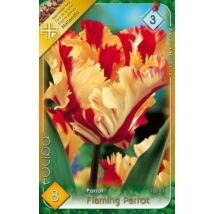 VIRÁGHAGYMA TULIPÁN Tulipa Flaming Parrot 8db/cs 10/11