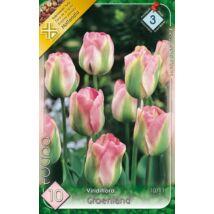 VIRÁGHAGYMA TULIPÁN Tulipa Groenland 10db/cs 10/11