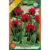 VIRÁGHAGYMA TULIPÁN Tulipa Hollywood 10db/cs 10/11