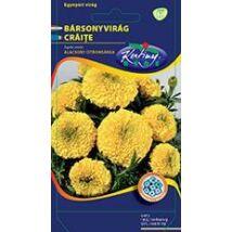 DÍSZNÖVÉNY BÁRSONYVIRÁG RÉDEI KERTIMAG nagyvirágú, alacsony,citromsárga