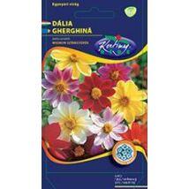 DÍSZNÖVÉNY DÁLIA RÉDEI KERTIMAG egyszerű virágú, színkeverék