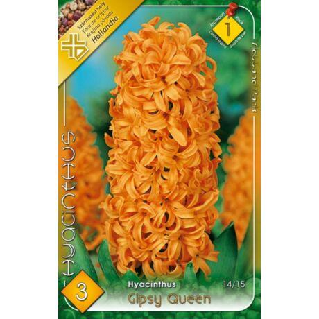 VIRÁGHAGYMA JÁCINT Hyacinthus Gipsy Queen 3db/cs 14/15