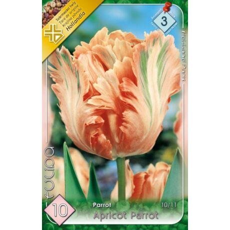 VIRÁGHAGYMA TULIPÁN Tulipa Apricot Parrot 10db/cs 10/11