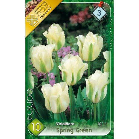 VIRÁGHAGYMA TULIPÁN Tulipa Spring Green 10db/cs 10/12